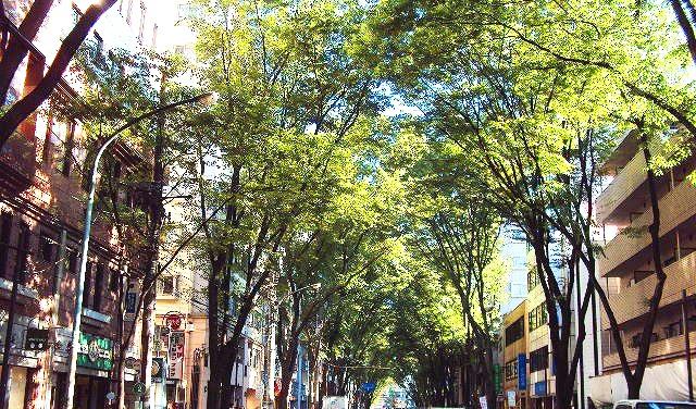 杉並区の街路樹