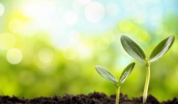 地面から出た新芽