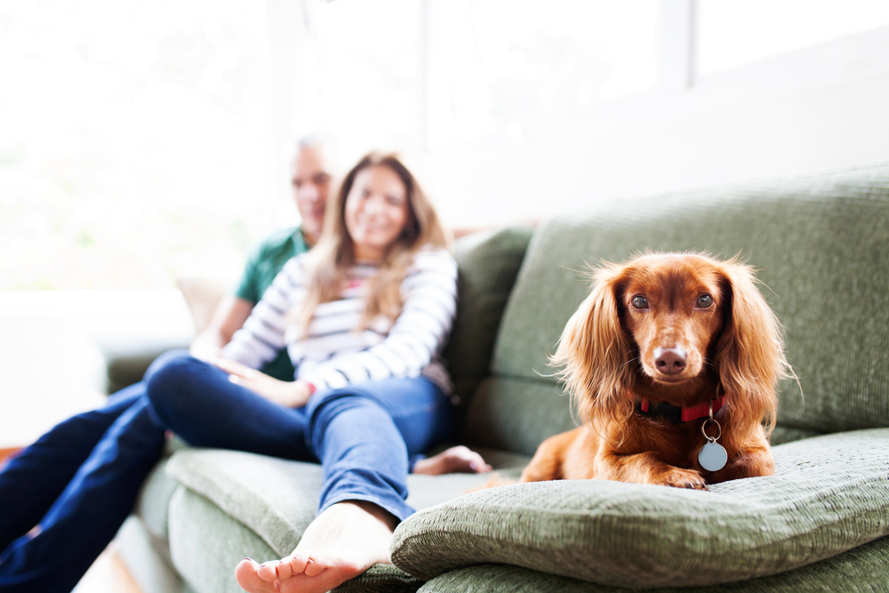 カップルと室内犬