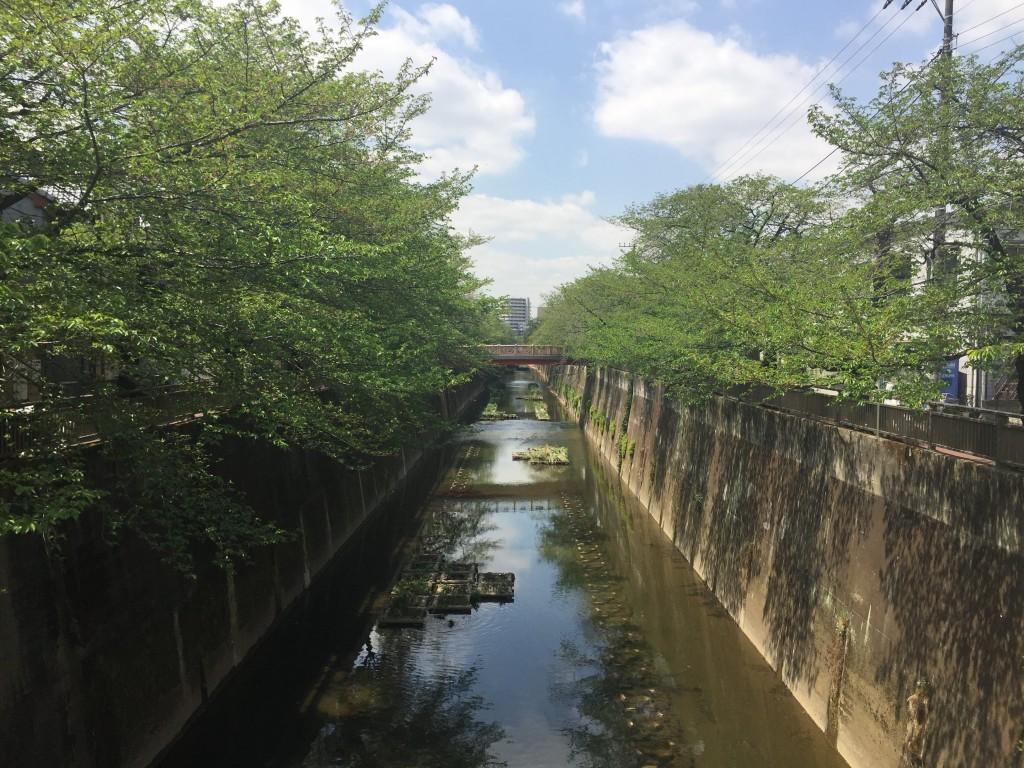 川と川沿いの並木道の風景