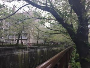 住宅街脇の川辺