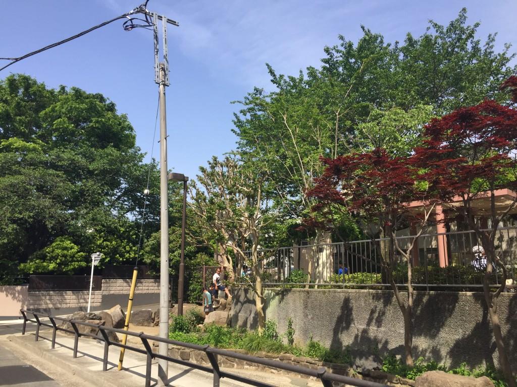 木が生い茂っている街中の公園