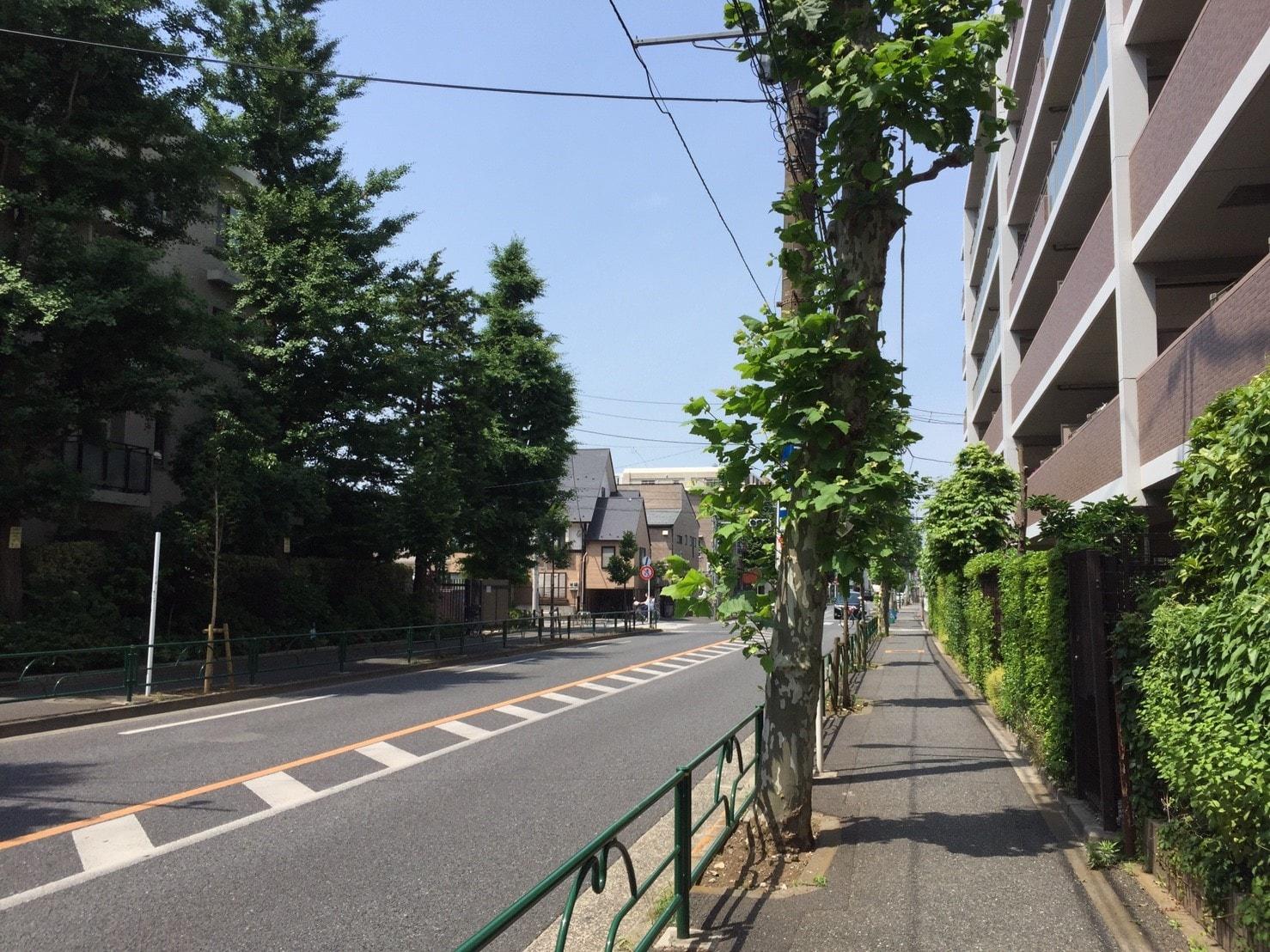 自然が多い住宅街の車道