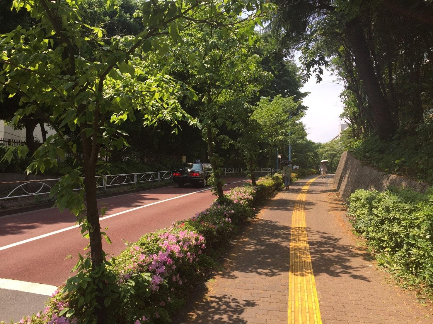 並木道になっている通りの風景