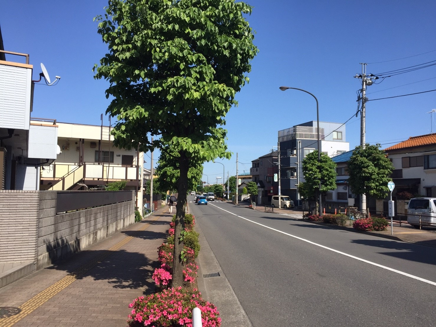 緑が多い住宅街の大通り
