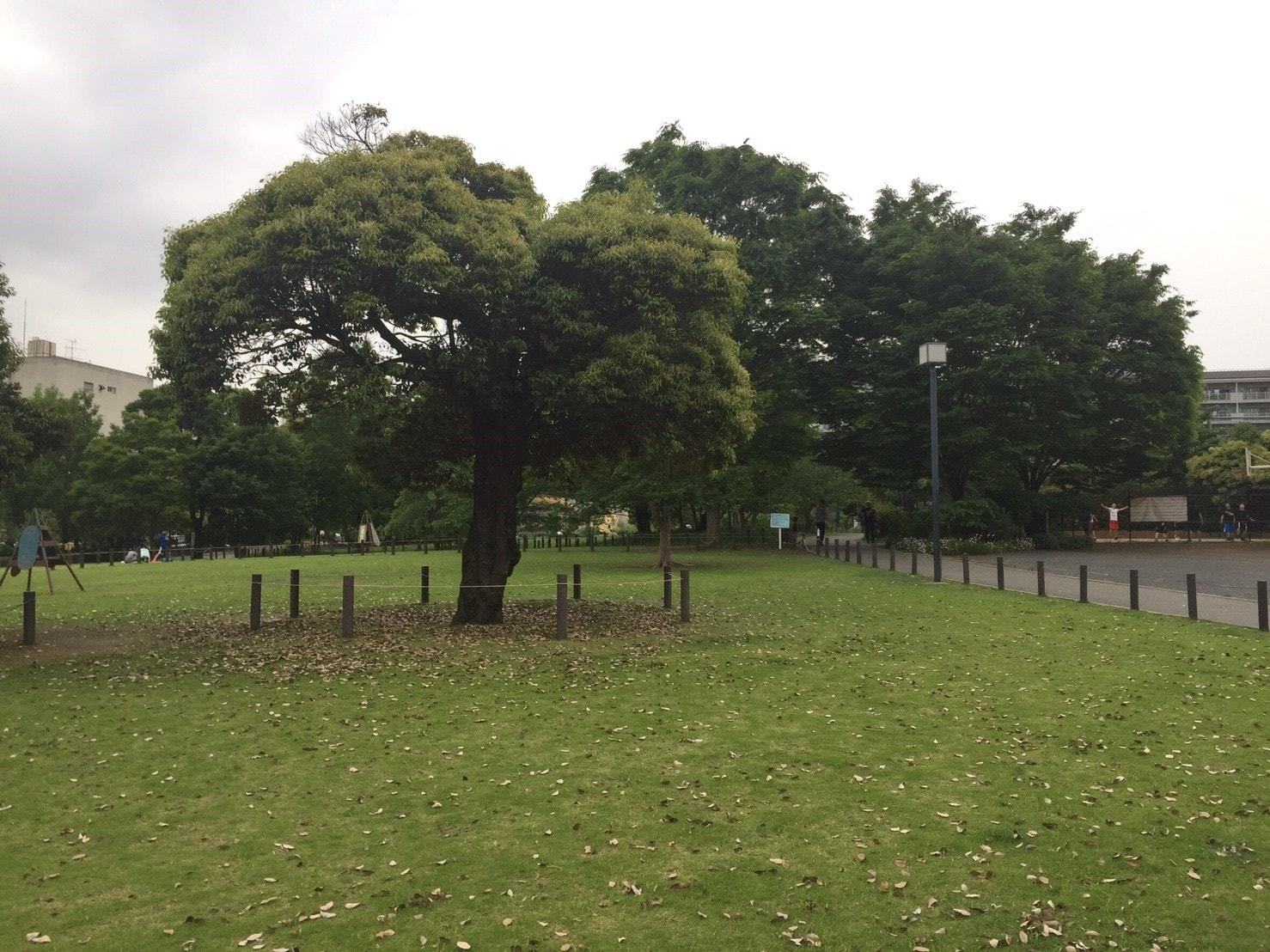 木や芝生が綺麗な公園の風景