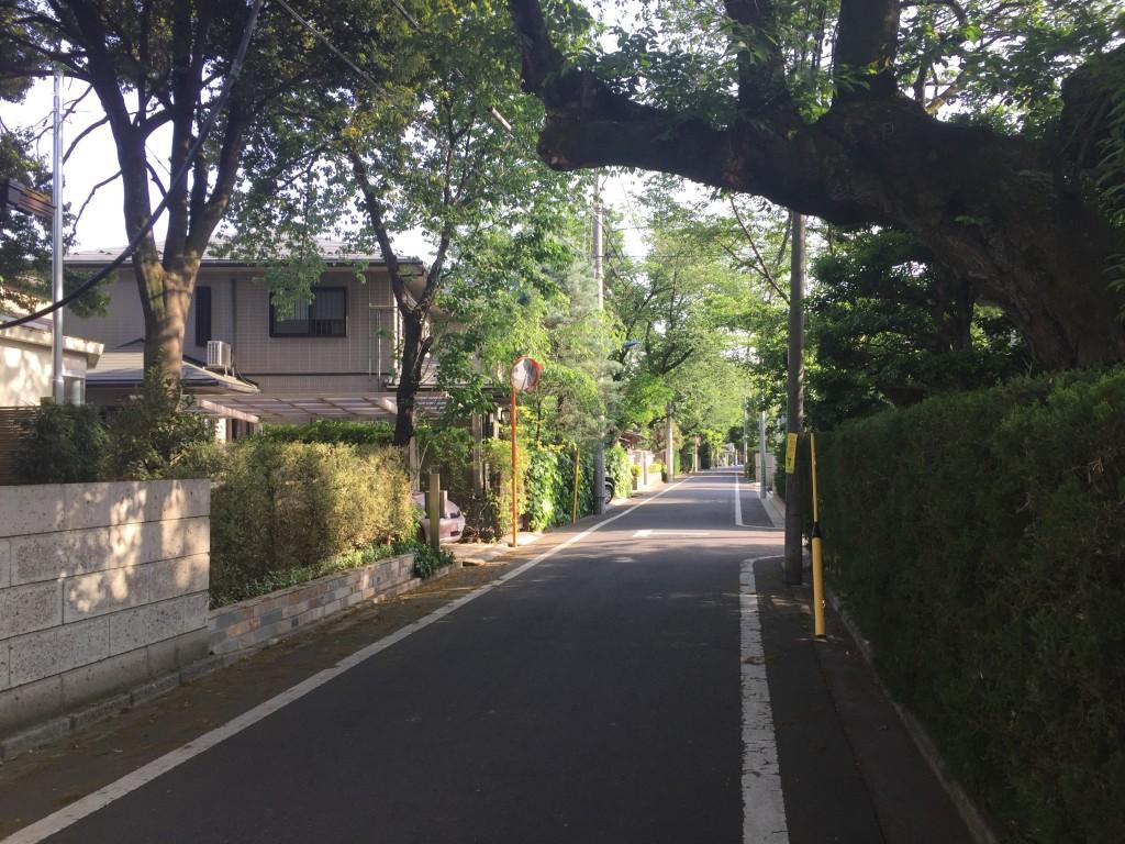 自然が多い住宅街の通り