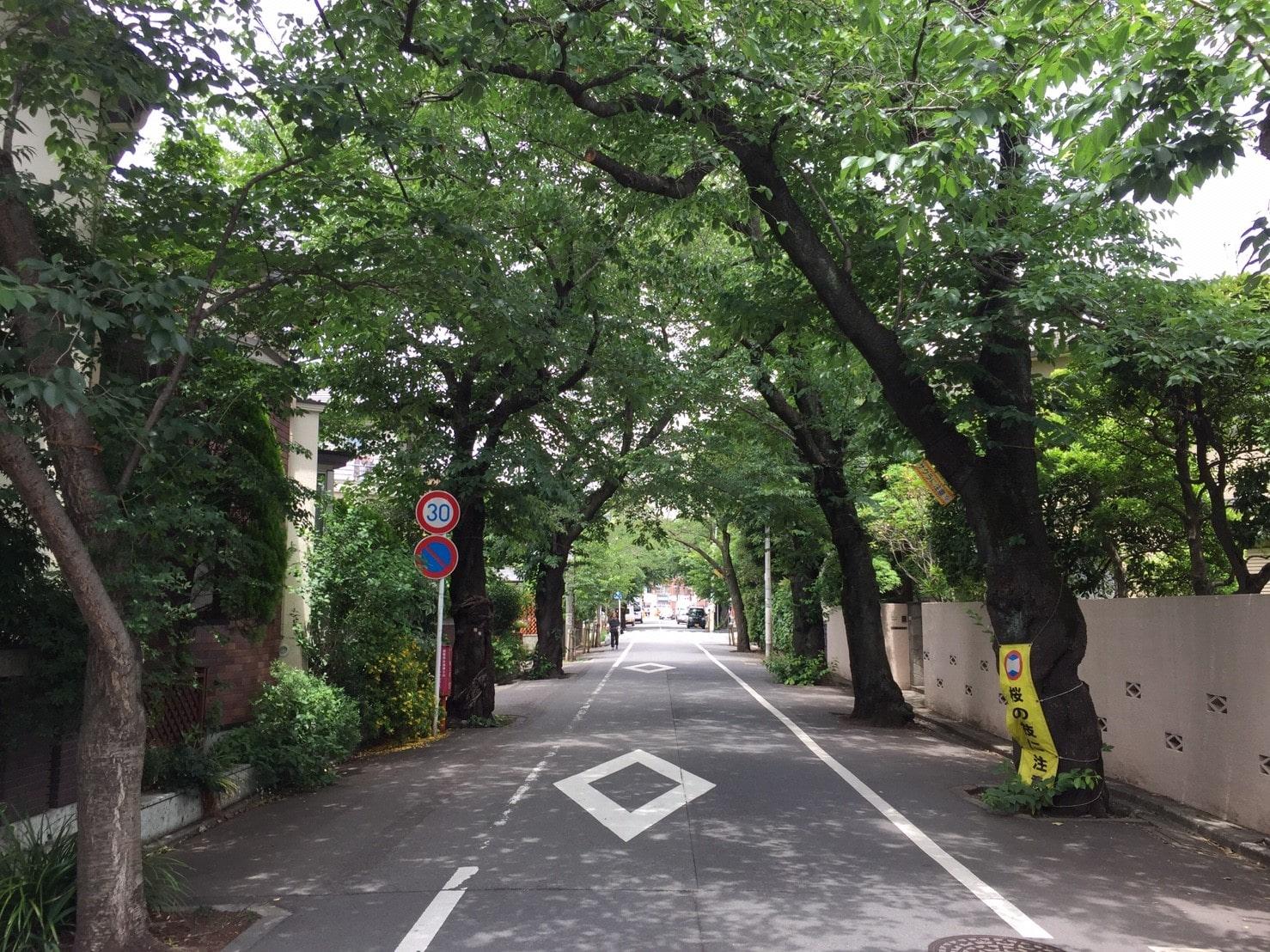緑にあふれている並木道の外観
