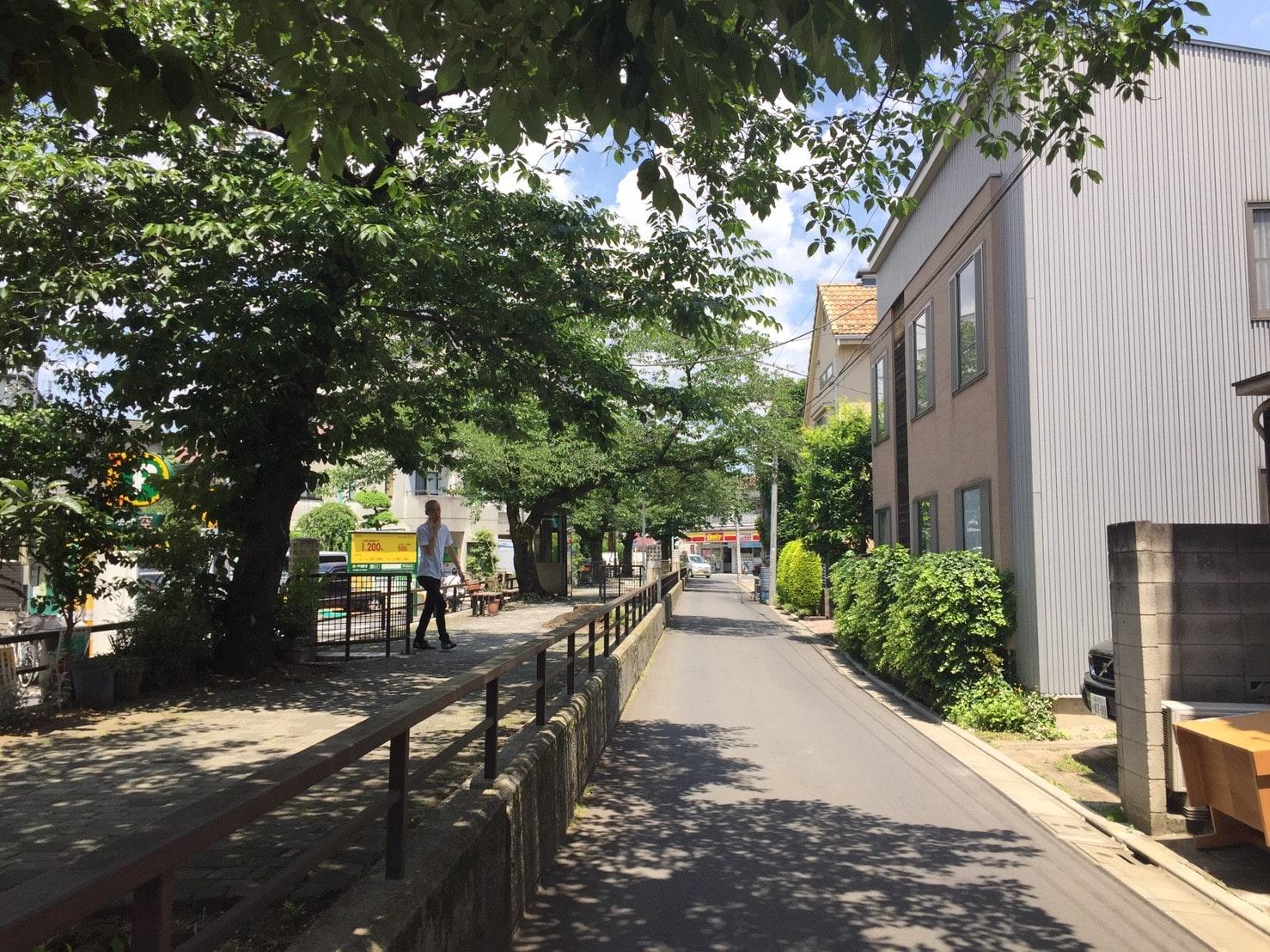 住宅街の並木道