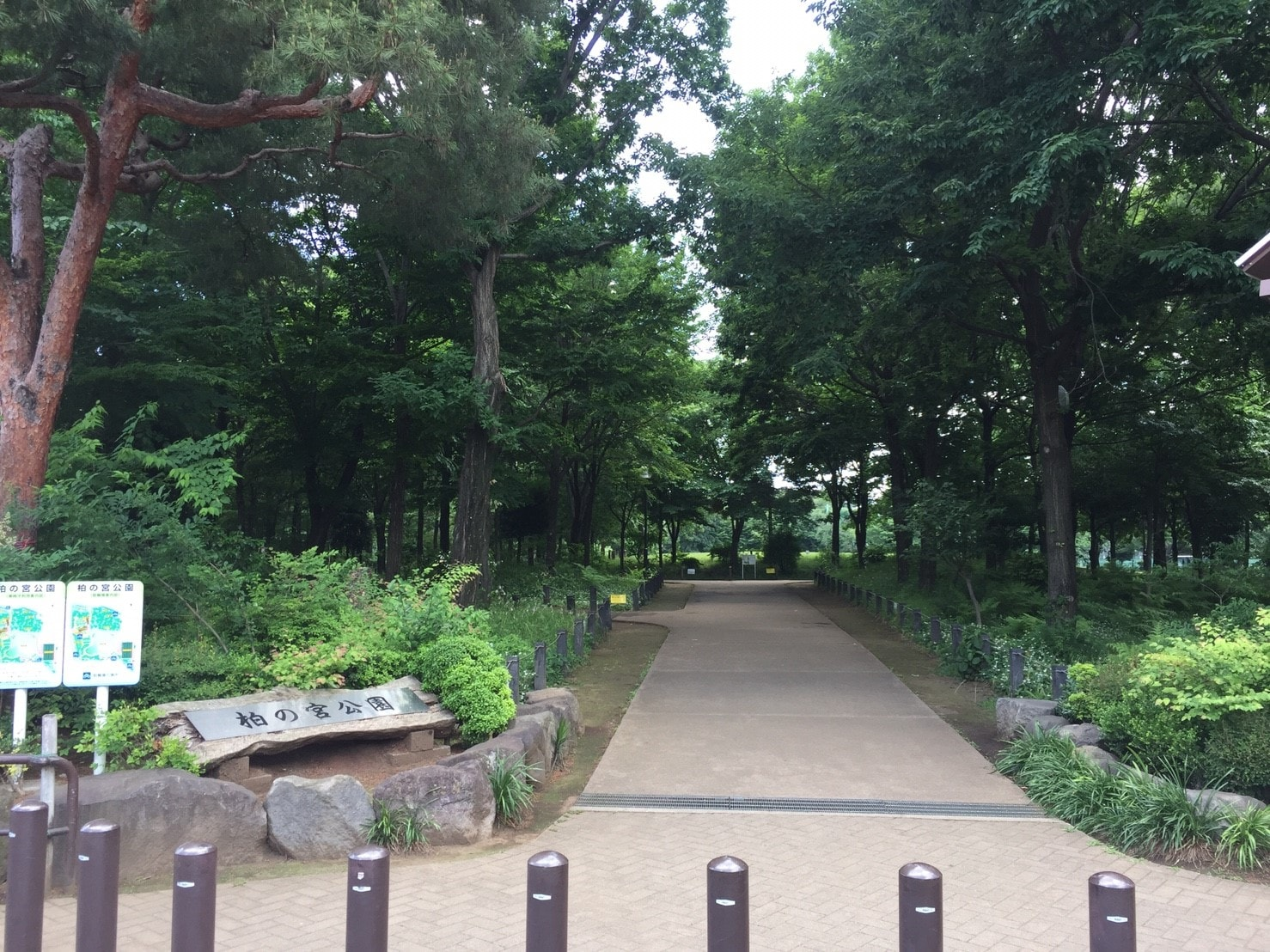 緑が多い自然公園の外観