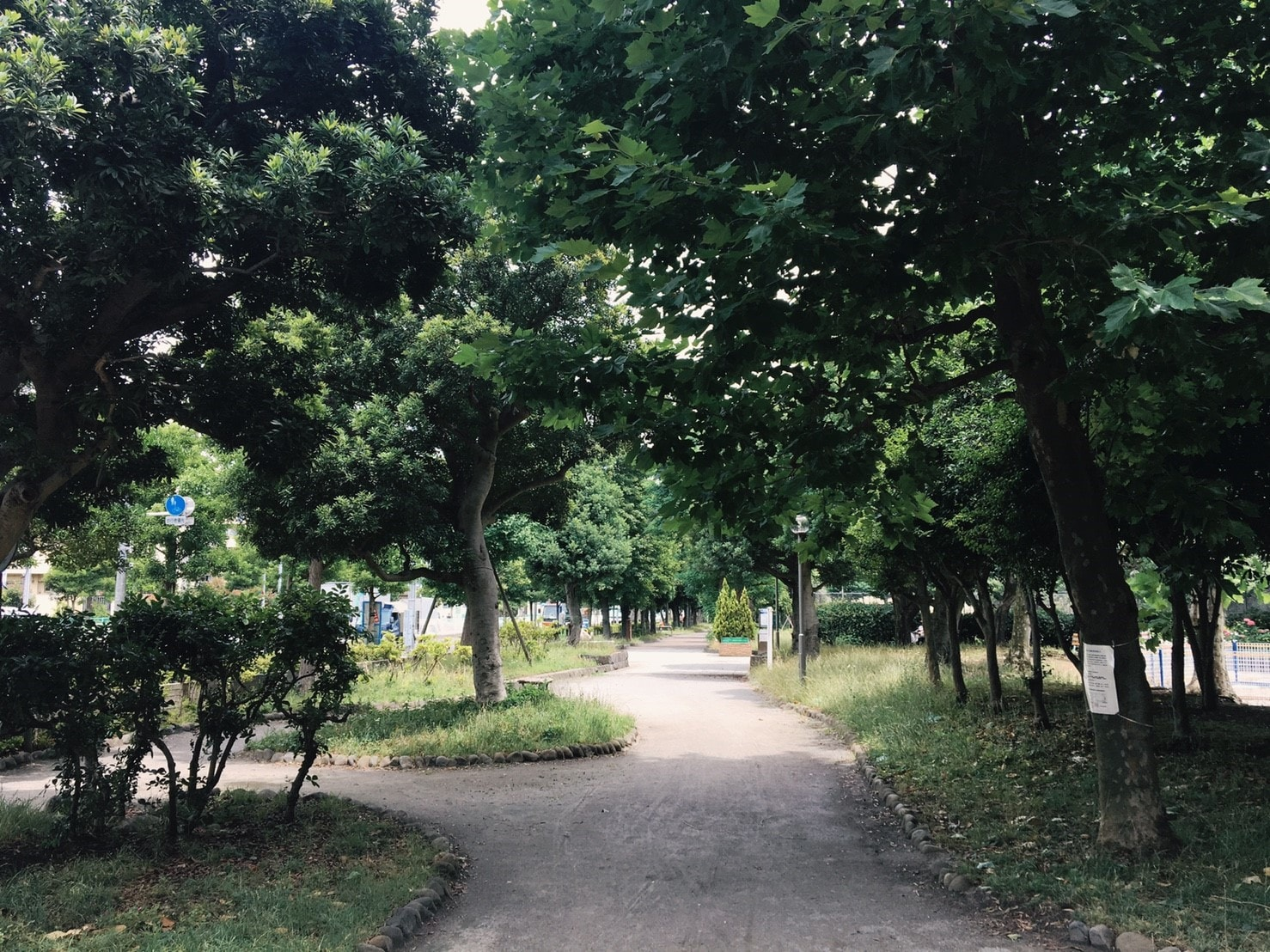 団地近くの公園