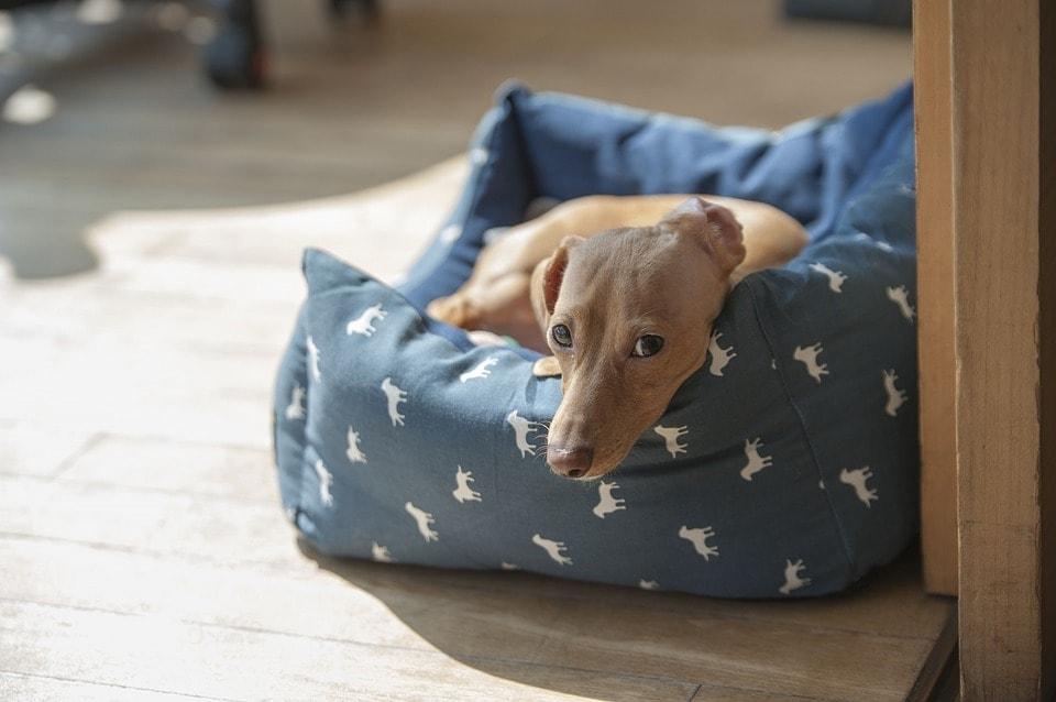 クッションに座る犬