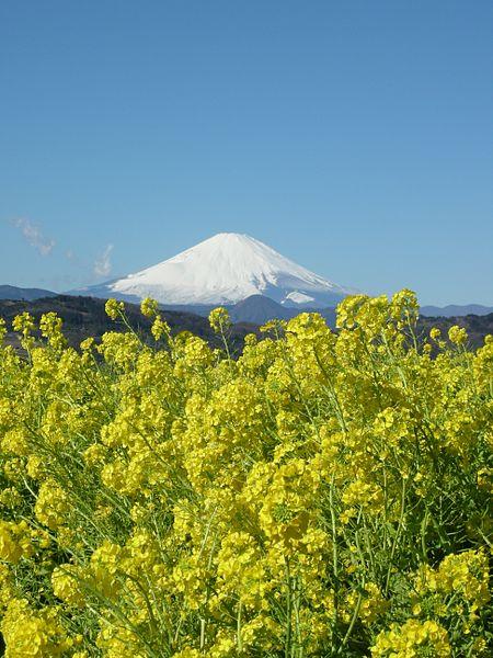 吾妻山からの景色