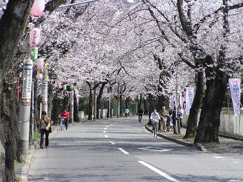 常磐平桜通り