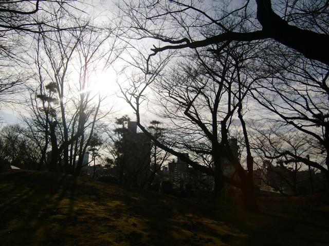 冬の木枯らし