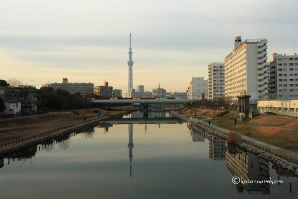旧中川河川敷の風景