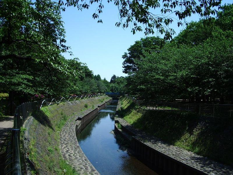 新緑が萌える善福寺川緑地