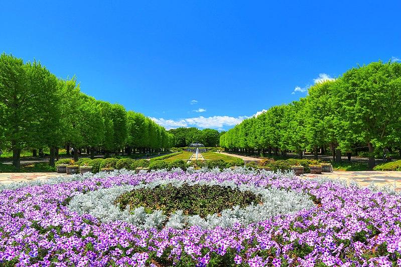 初夏の昭和記念公園