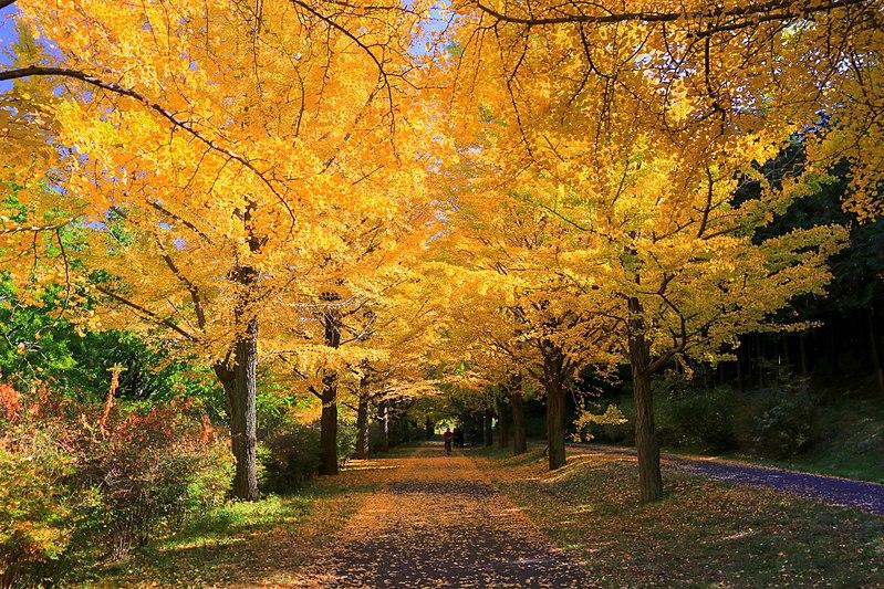 秋の昭和記念公園
