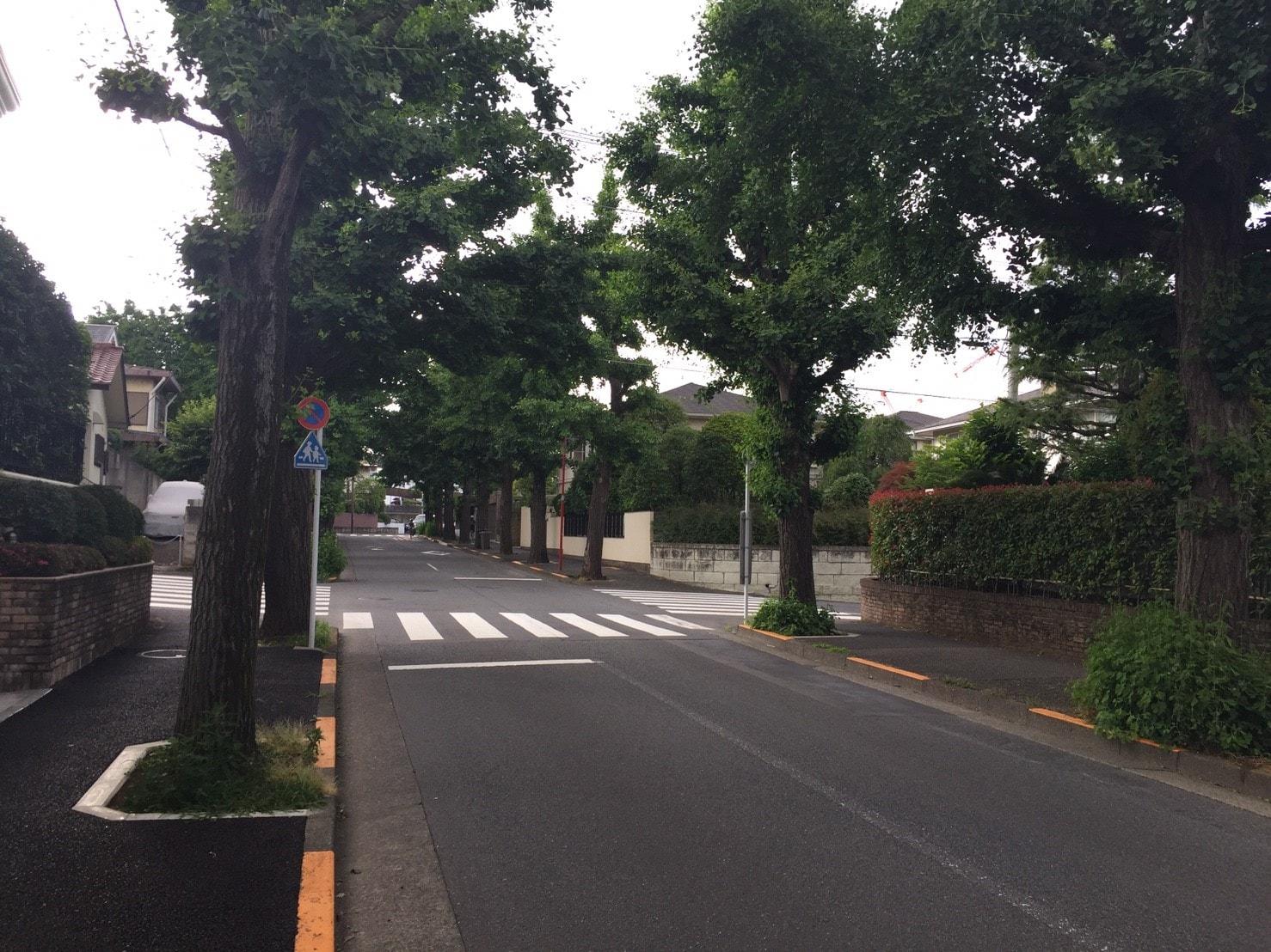 街路樹が多い街並み