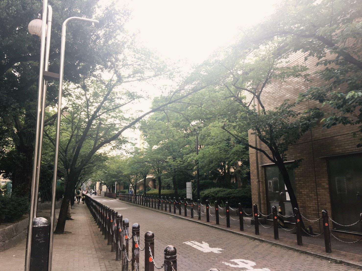 緑が多い街並み