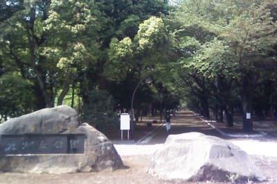 落ち着いた公園の風景