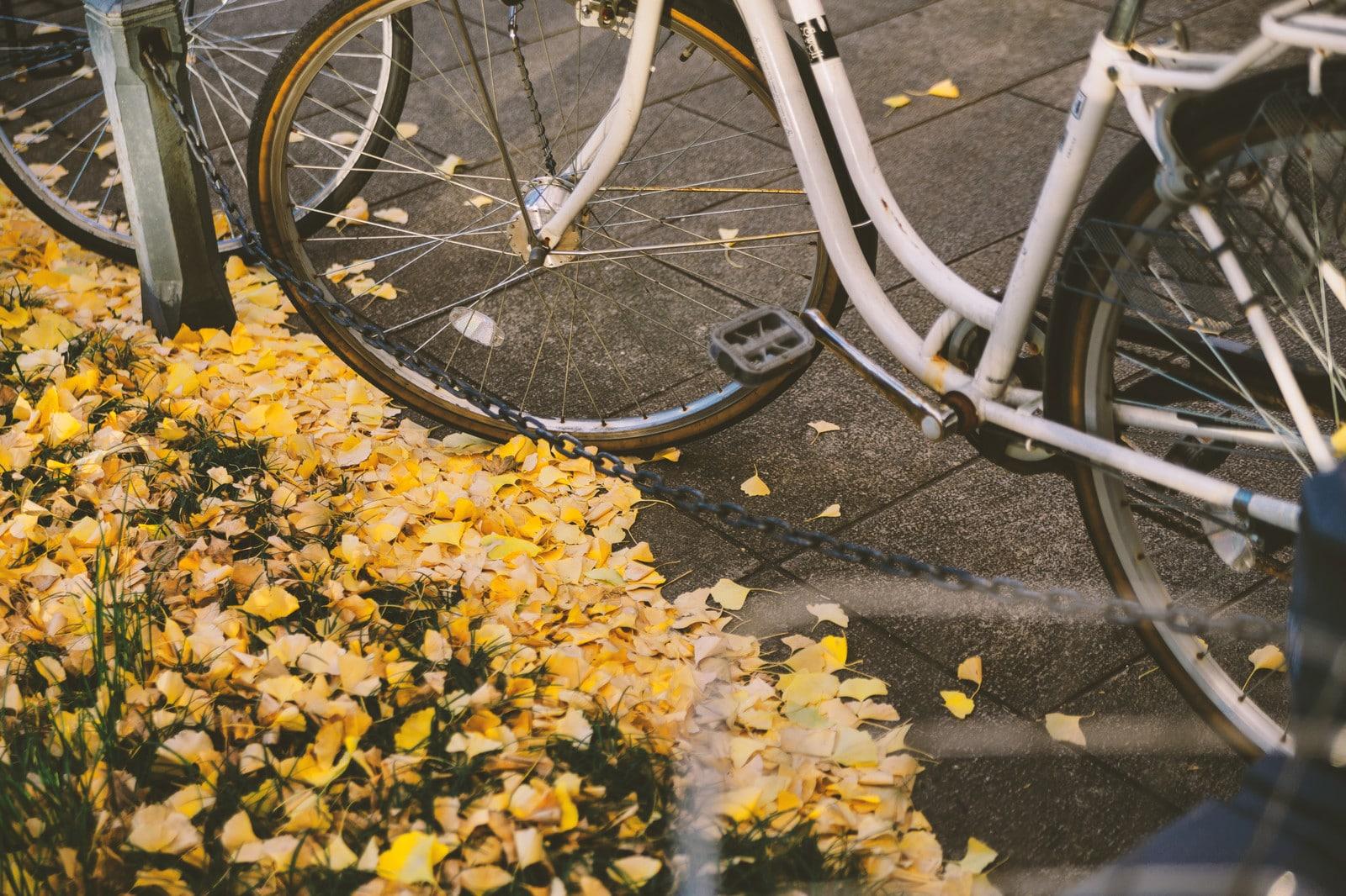 舗道の自転車