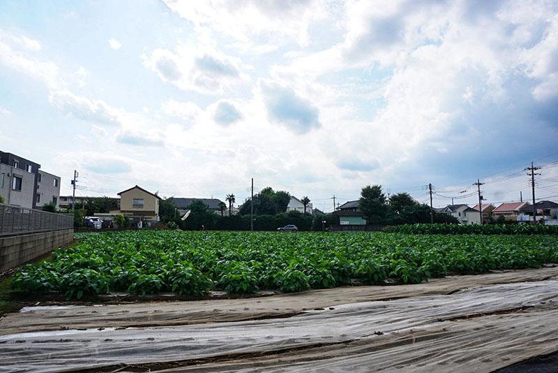 高校近くの畑
