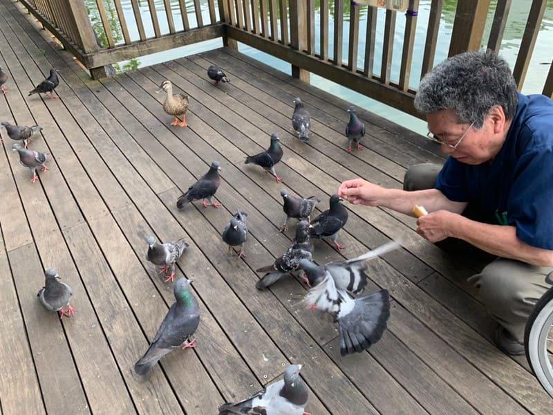 ハトに餌をやる男性