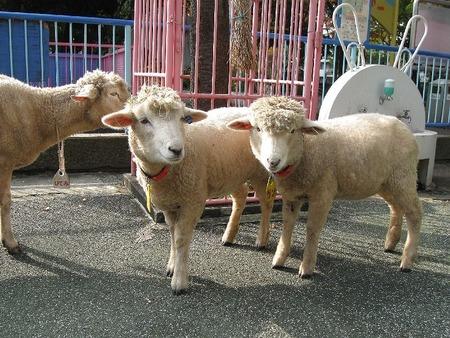 こども動物園 高島平分園のヤギとヒツジ