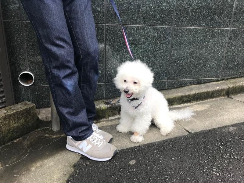 目白を散歩中の犬