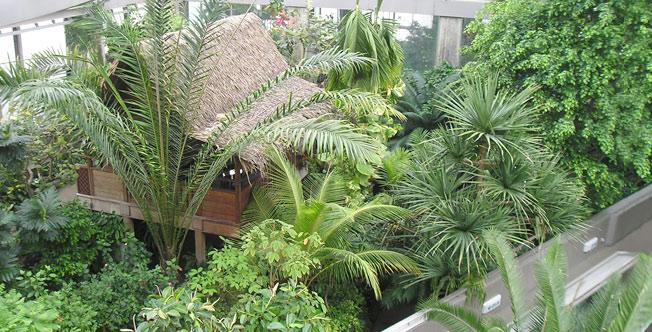 板橋区立熱帯環境植物館の園内
