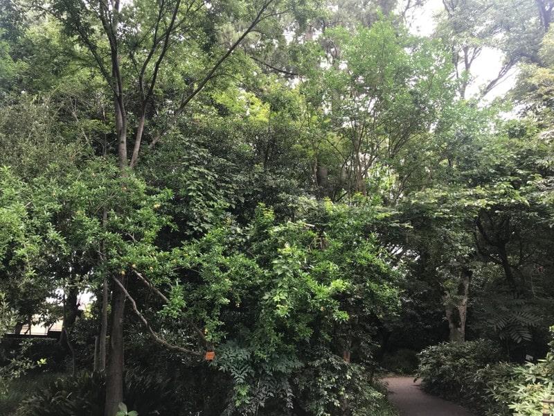 目白の森の木