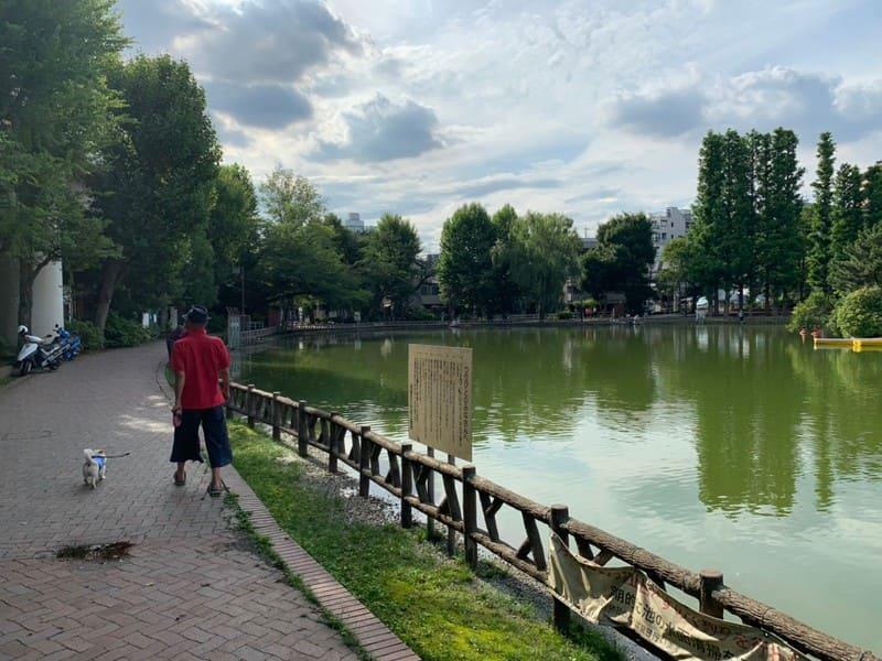 池のほとりの風景