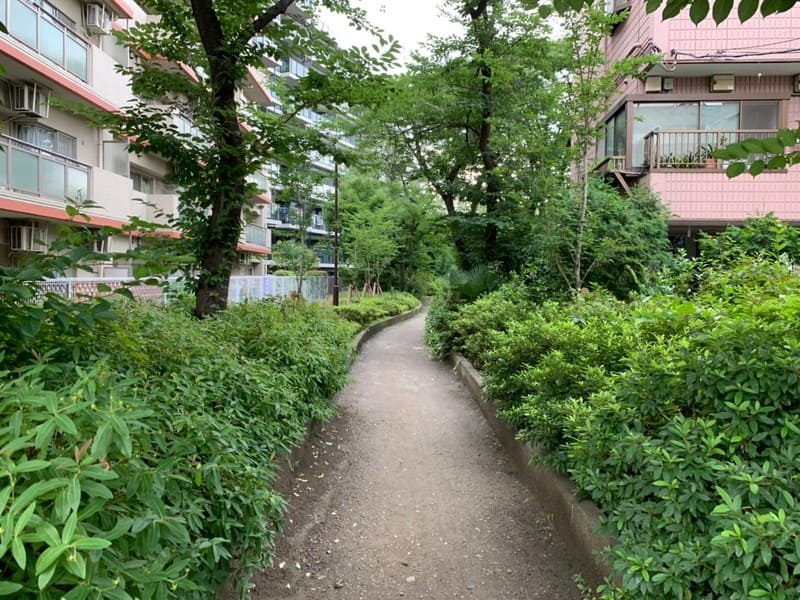 住宅街の緑豊かな小道