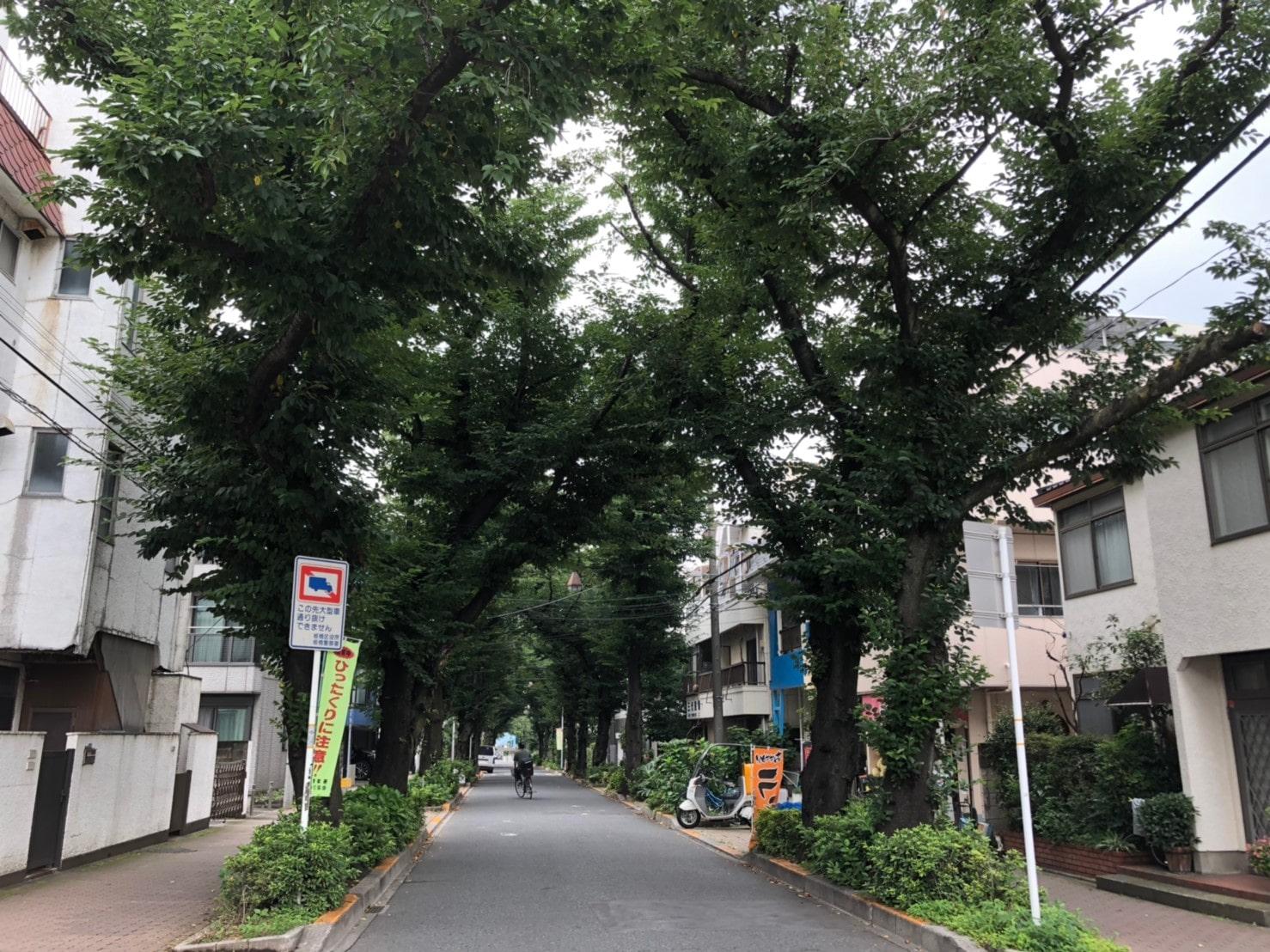 帝京大学近くの街路樹のある通り