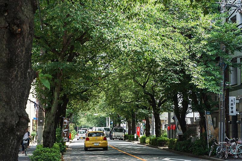 大踏切通りの街路樹