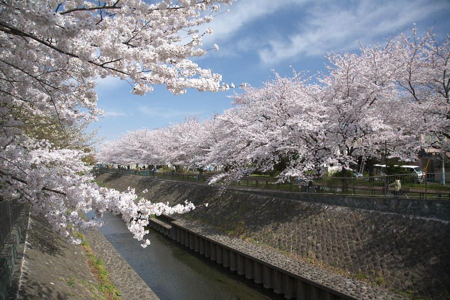 善福寺川緑地の風景