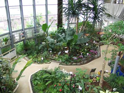 ふれあい植物センターの風景