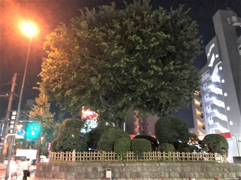 志村坂上駅前にある「志村一里塚」