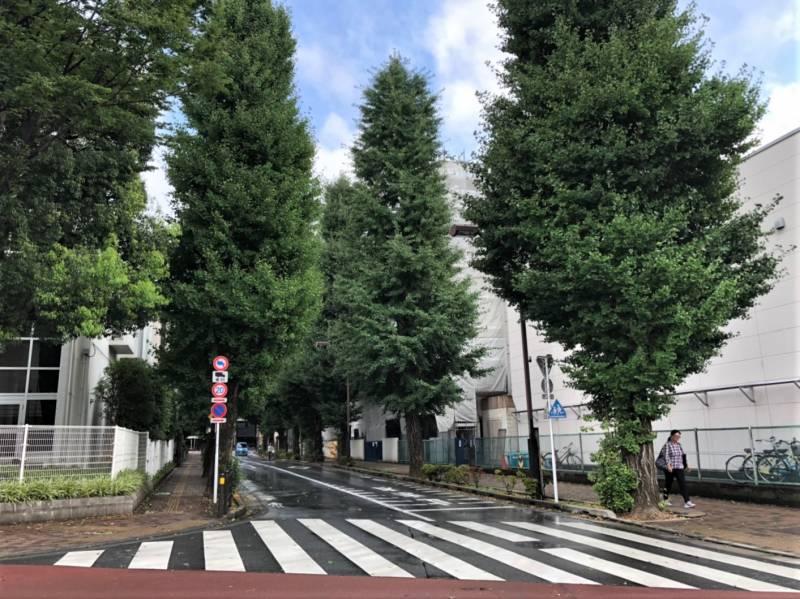 東京都練馬区貫井1丁目の街路樹のある通り