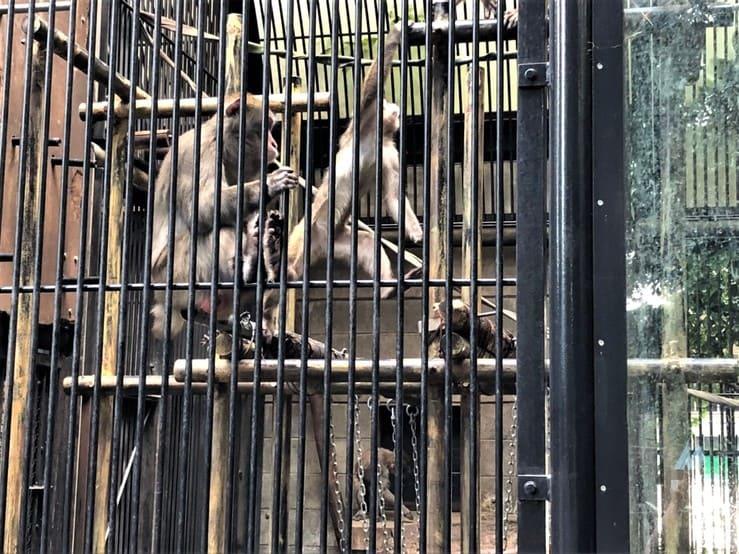 大宮公園小動物園のサル