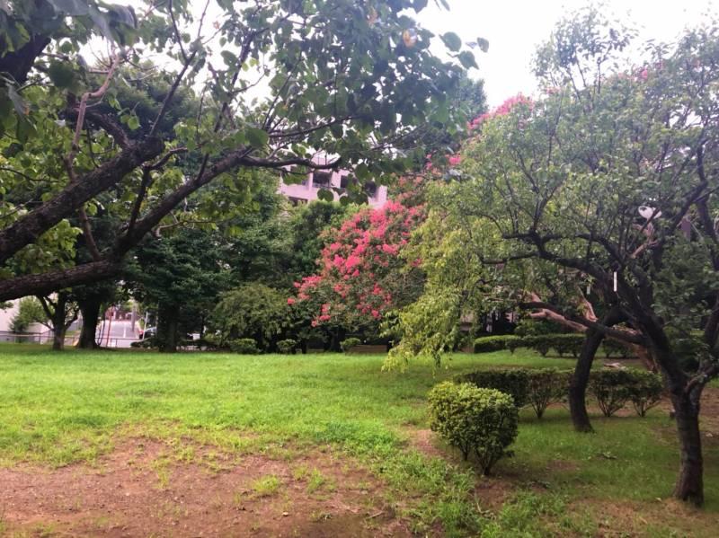花が咲いている木々