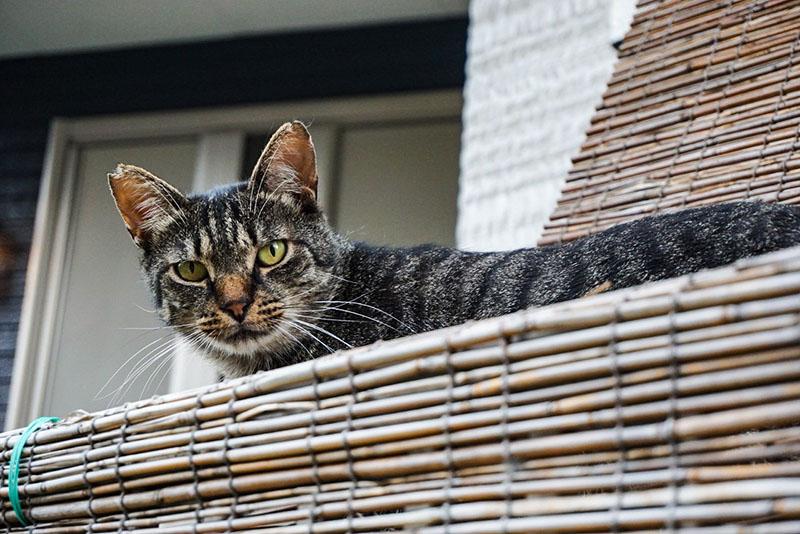 小道にいた猫