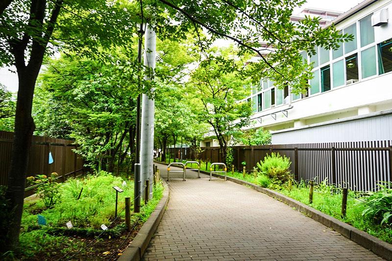 江東区立東陽中学校と緑道