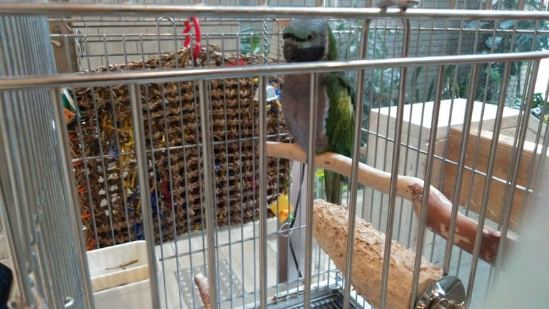 熱帯環境植物館の鳥