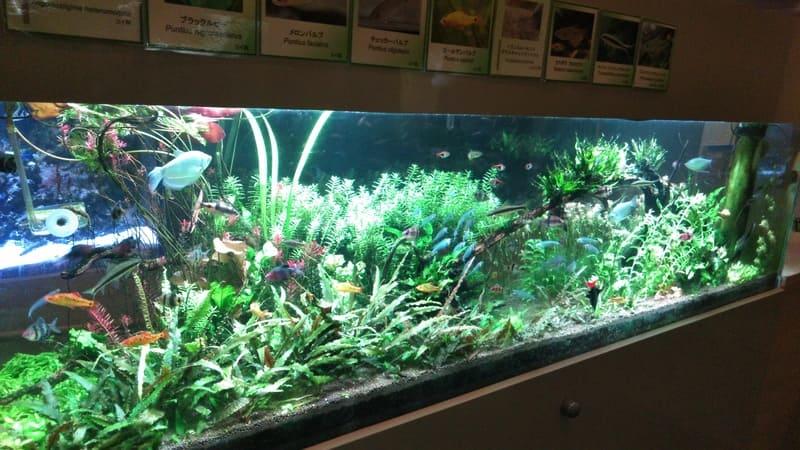 熱帯環境植物館の熱帯魚