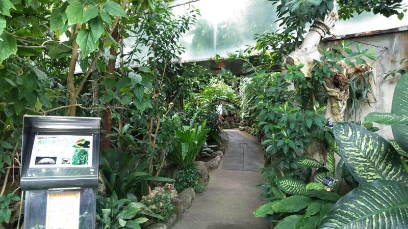 熱帯環境植物館の熱帯林
