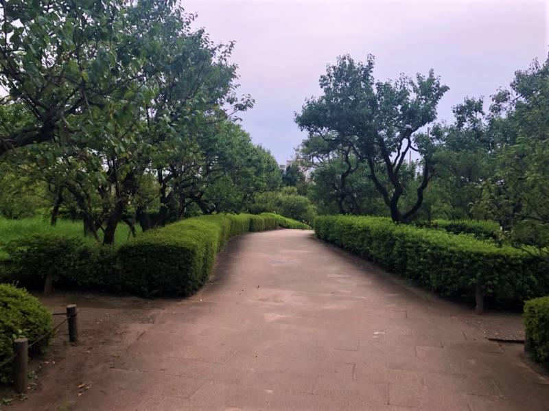 羽根木公園西側
