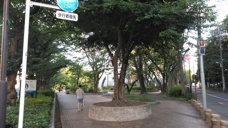 東京都立城北中央公園<br />